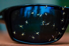 Bugs splattered on sunglasses Royalty Free Stock Photography