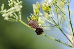 Bugs Royalty Free Stock Photo
