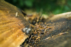 Bugs in the tree. Bugs in the fallen tree Stock Photo
