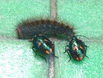Bugs versus caterpillar Royalty Free Stock Photos