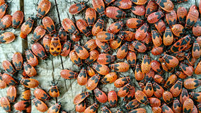 Bugs are vibrant and diverse insects. Stock Image