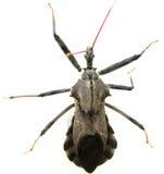 bugs ze Arkivfoto