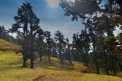Bugyals, flat lands at upper Himalayas, Uttarakhand, India. Sun shining on Bugyals, alpine pasture lands, or meadows, in higher elevation range of Himalayas in stock photos