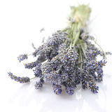 Buhch of lavander Stock Images