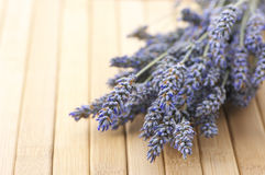 Buhch of lavander Royalty Free Stock Photos
