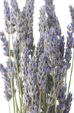 Buhch of lavander Royalty Free Stock Images