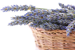 Buhch of lavander in basket Royalty Free Stock Photos