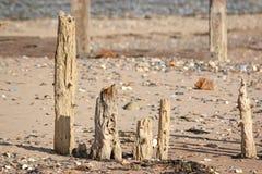 Buhnen auf Strand Dawlish Waren Stockfotos