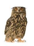 Buho de águila eurasiático Foto de archivo
