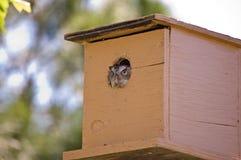 Buho en birdhouse. Imagen de archivo libre de regalías