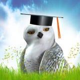 Buho sabio en el sombrero de la graduación Fotografía de archivo