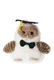 Buho suave de graduación del juguete Imagen de archivo