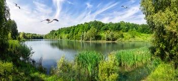 Buig de rivier met groene bomen op de kust stock foto