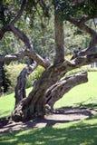 Buigende boomachtergrond Royalty-vrije Stock Foto's