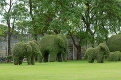 Buigende olifantsbomen Stock Afbeeldingen