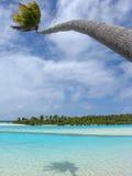 Buigende Palm royalty-vrije stock afbeelding