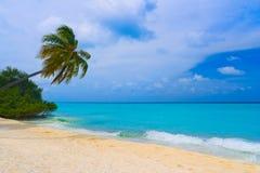 Buigende palm op tropisch strand Stock Foto