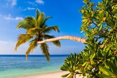 Buigende palm op tropisch strand Stock Foto's