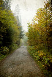 Buigende weg in de herfstbos Stock Foto