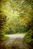 Buigende weg in de herfstbos Royalty-vrije Stock Fotografie