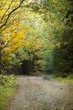 Buigende weg in de herfstbos Stock Afbeeldingen