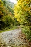 Buigende weg in de herfstbos Stock Foto's