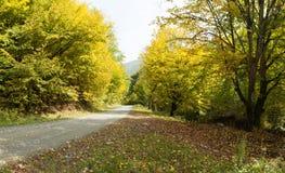 Buigende weg in de herfstbos Royalty-vrije Stock Afbeeldingen