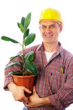 Builder with ficus Royalty Free Stock Photography