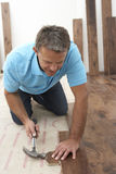 Builder Laying Wooden Flooring. Renovating House Stock Image