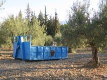 Builders skip in olive grove Stock Image