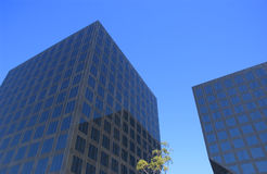 Building. Two black corporate buildings with tree and blue sky Stock Photos