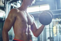 Building Biceps with Dumbbells royalty free stock images