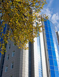 building and branch of autumn tree Royalty Free Stock Photos