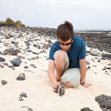 Building a cairn. Ten-years-old boy is  on white sand and black volcanic stone beach on Fuerteventura royalty free stock photography