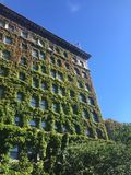 Building consumed by ivy. This is a hotel consumed in a multitude of red and green ivy Stock Image