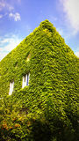 Building covered by green ivy leaves Stock Photos