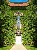 Building covered in ivy Stock Photo