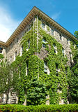 Building covered in ivy Royalty Free Stock Photos