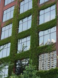 Building covered with leaves / greenness. Detail of a building covered with leaves and greenness in Chicago, Illinois. Also, a more modern building reflects Royalty Free Stock Images