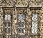 Free Building Covered With Dry Ivy Royalty Free Stock Images - 162873329