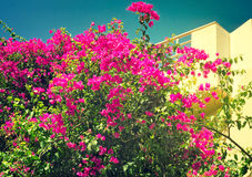 Building facade fragment with beautiful flowers on a balcony. Royalty Free Stock Image