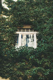 Building facade with window surrounded with lush ivy Stock Image