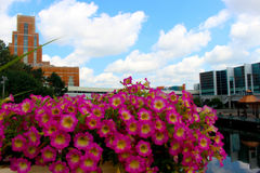 Building with Flowers. Flowers in front of the Accident Fund building and the Lansing Center on the Grand River stock images