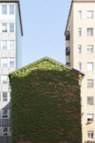 A building with green leaves of ivy Stock Photo