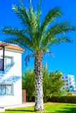 Building green palm plant Royalty Free Stock Photography