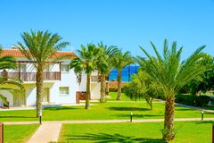 Building green palm plant Royalty Free Stock Photo