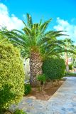 Building green palm plant Royalty Free Stock Images