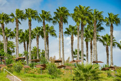 Building green palm plant. Part of the territory of the hotel building with green palm plant Royalty Free Stock Image