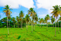 Building green palm plant. Part of the territory of the hotel building with green palm plant Royalty Free Stock Photos
