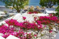 Building of hotel decorated with Bougainvillea flowers Royalty Free Stock Image